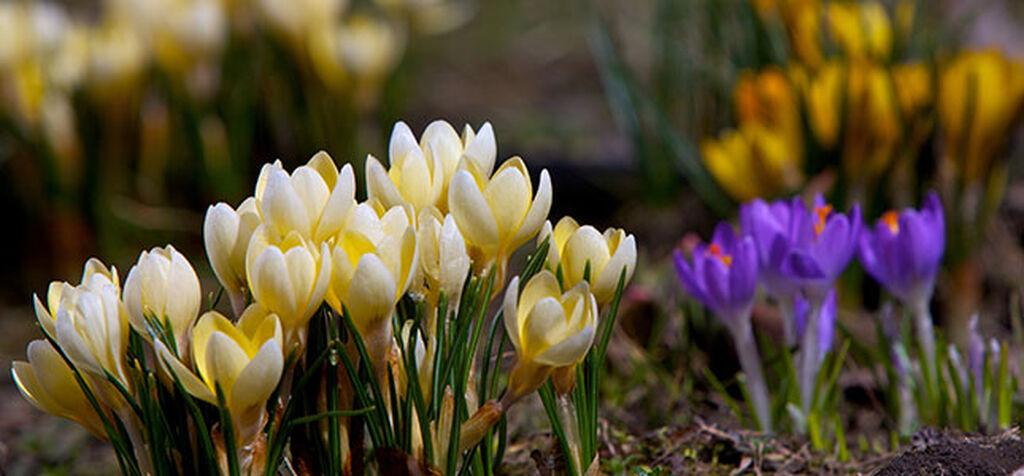 Våren er her – dette kan du gjøre nå