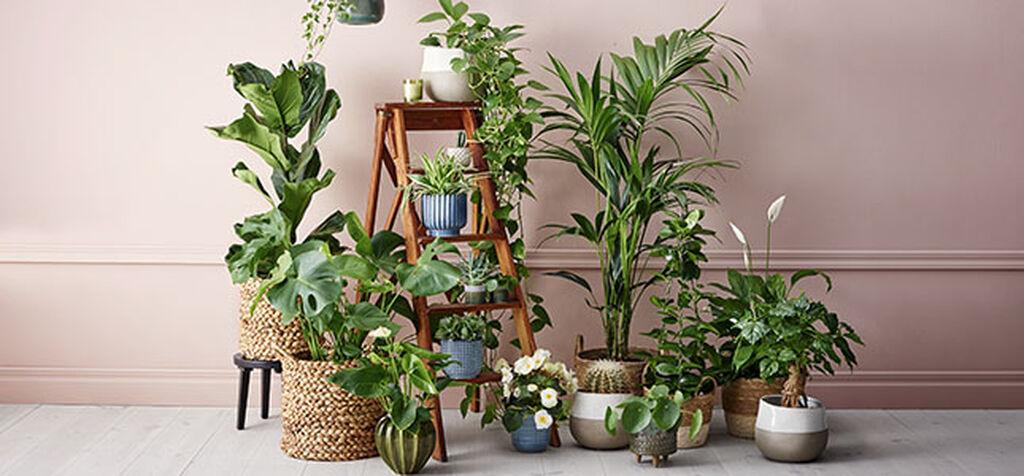 De ti mest trendy plantene i 2020