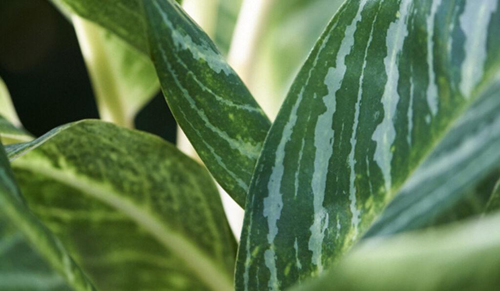 Planter som renser og rengjør luften