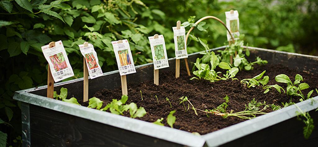 Så grønnsaker direkte utendørs – året rundt