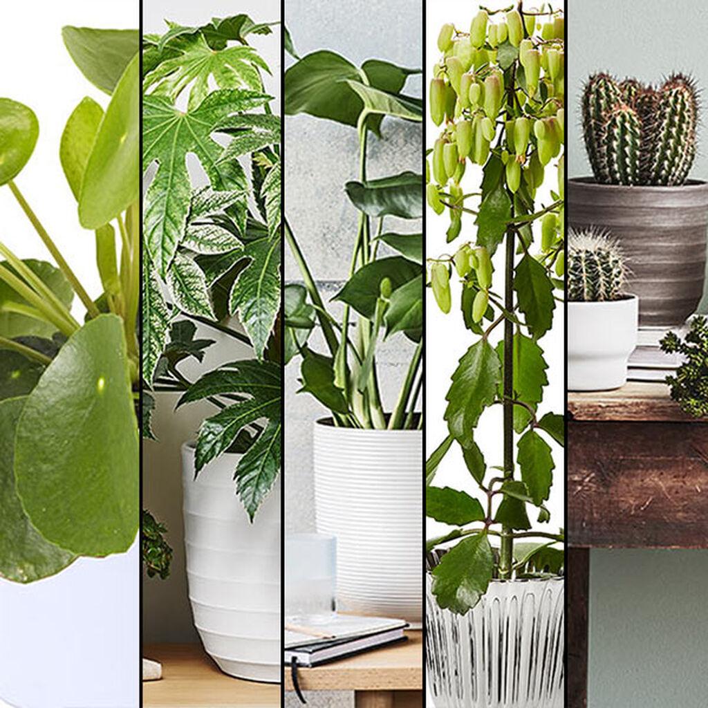 De fem mest trendy potteplantene i 2016