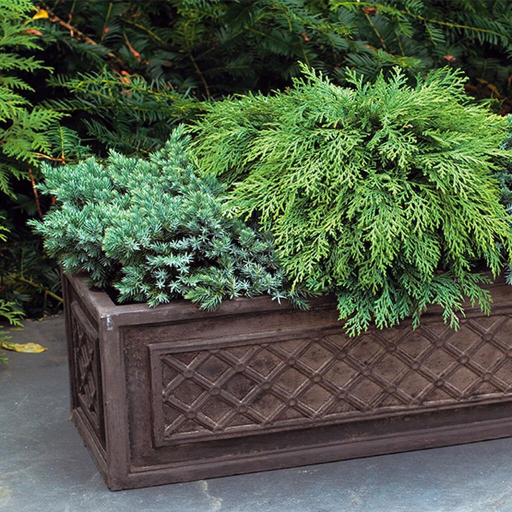 Vintergrønne busker - slik lykkes du