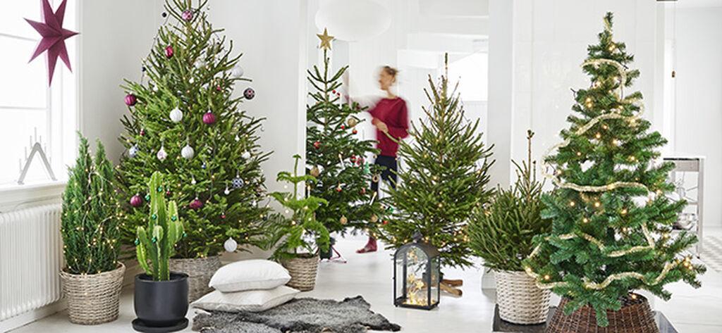 Slik lykkes du med juletreet – trinn for trinn
