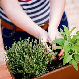 Omplanting - slik lykkes du
