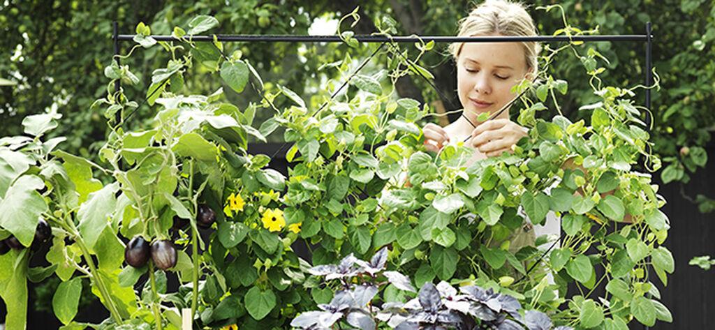 Start egen økologisk dyrking