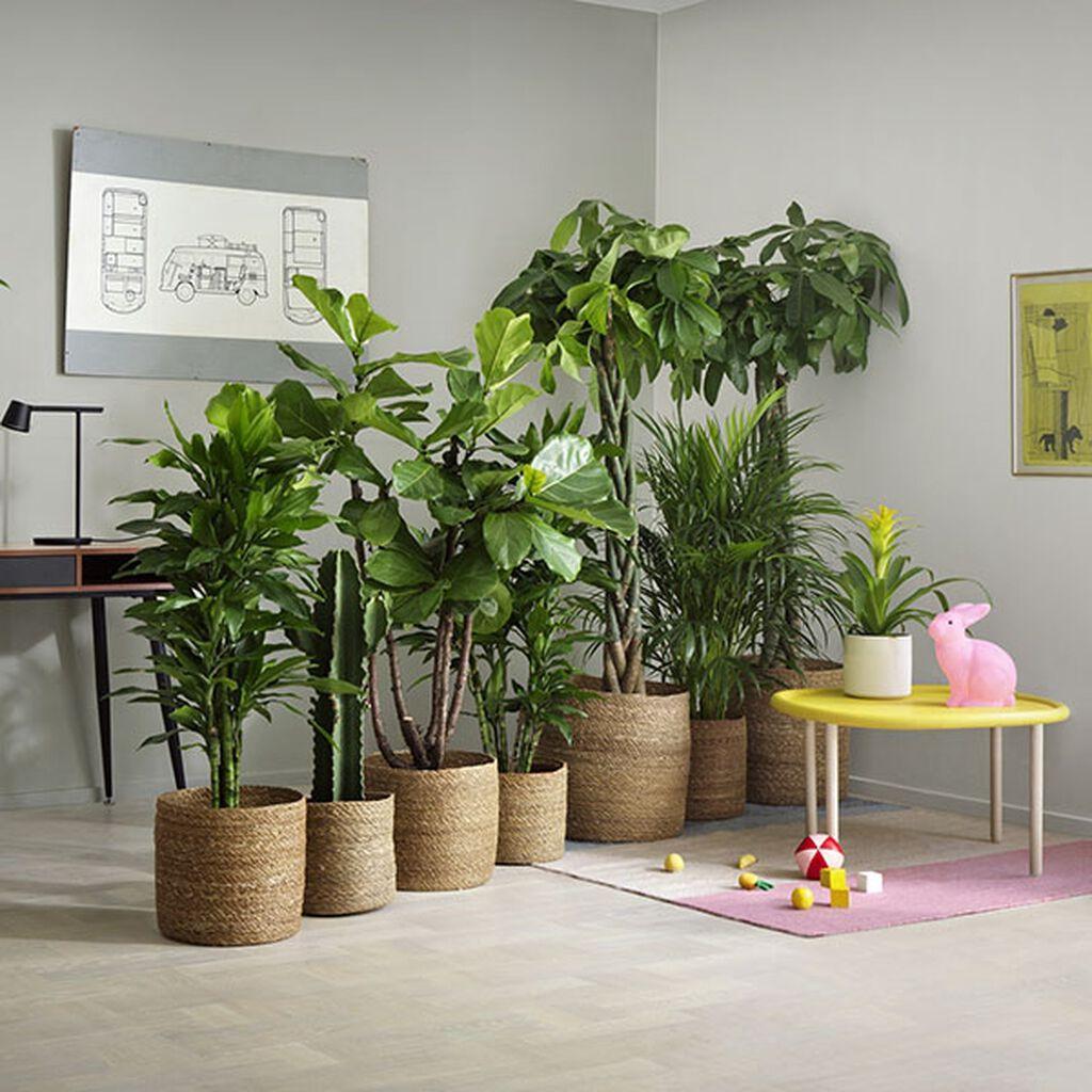 Innred med planter i ulike størrelser