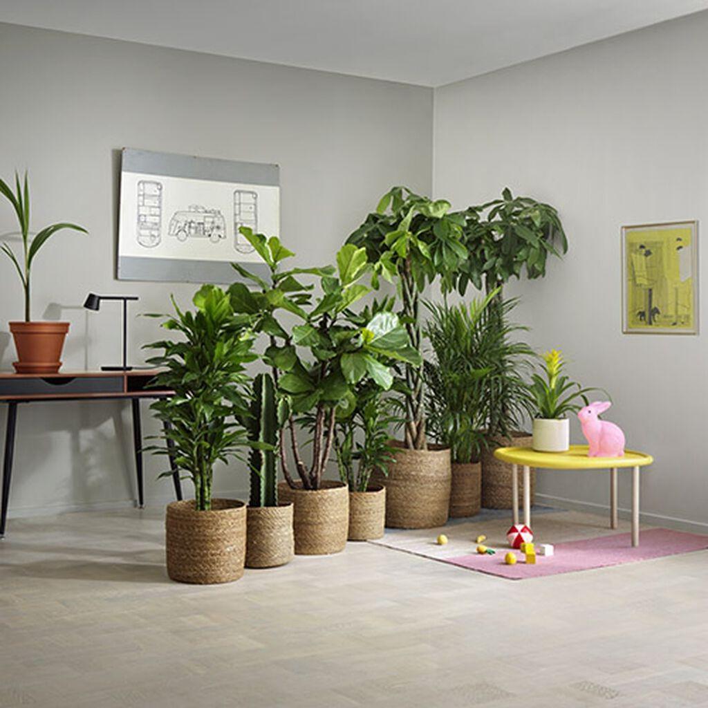 Planter som romdeler