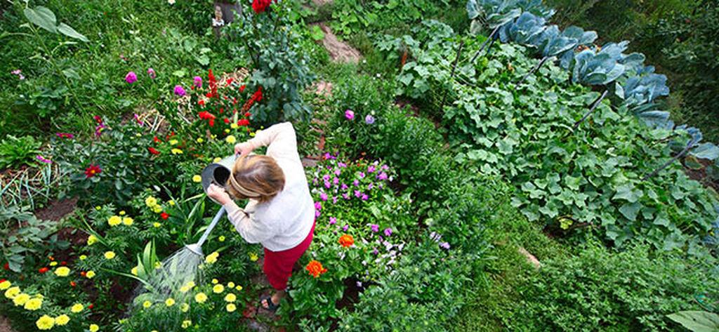 Tips når du skal planlegge og anlegge hage