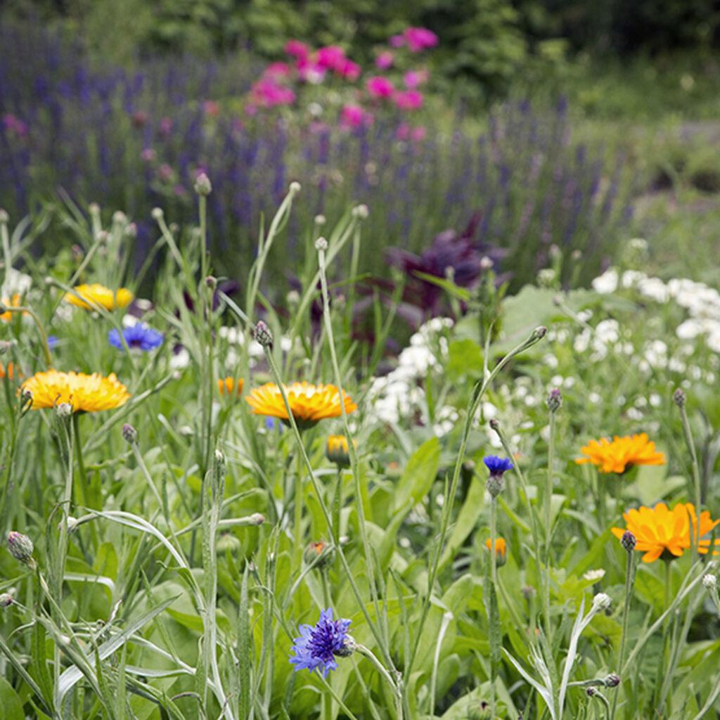 To ferdig komponerte blomsterbed for hagen din