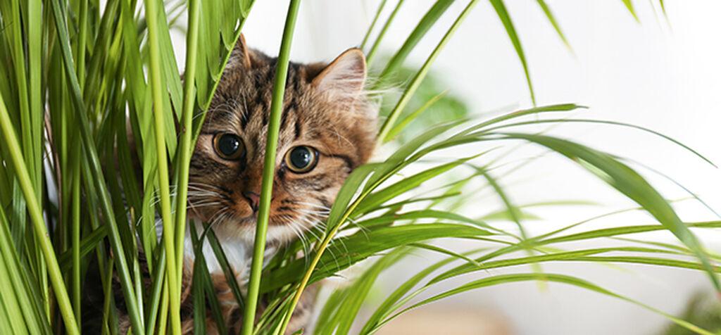 Disse plantene er giftige for katter og hunder