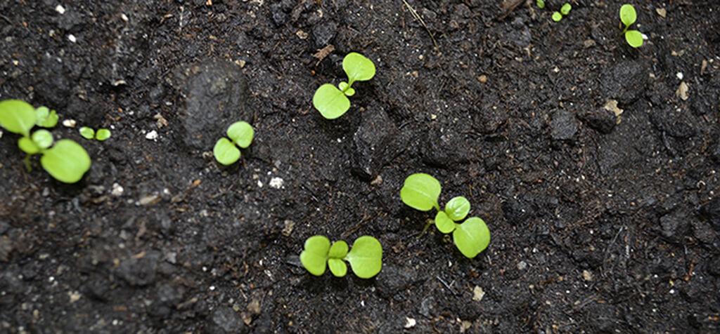 Mikroliv – hagens minste medhjelper