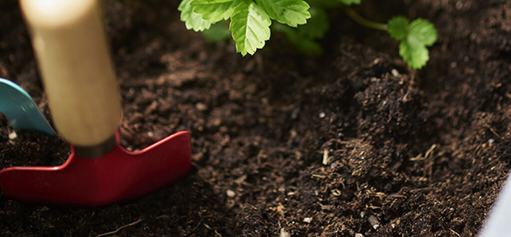 Jordskole – best mulig jord til plantene dine