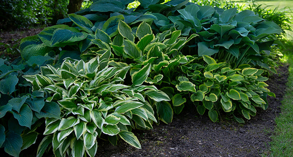 Planter i skyggen – slik lykkes du
