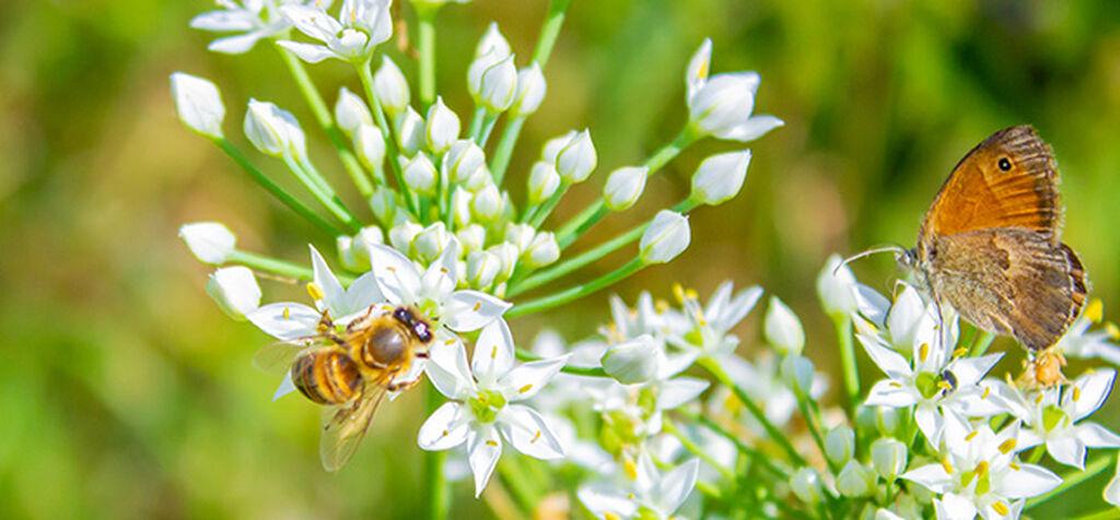 Ønsk nyttige insekter velkommen i hagen