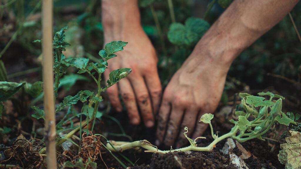 Permakultur – hage og dyrking i skjønn forening med naturen