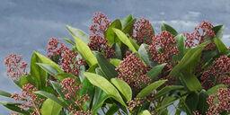 Topp fem planter som tåler frost