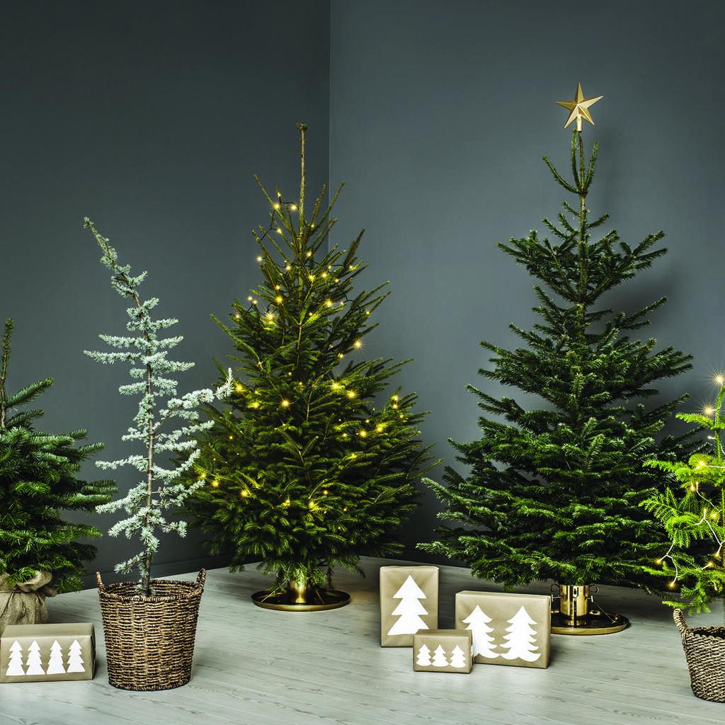 Helt nye Juletrevett-reglene | Plantasjen MA-47