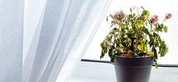 Slik får du plantene til å overleve ferien