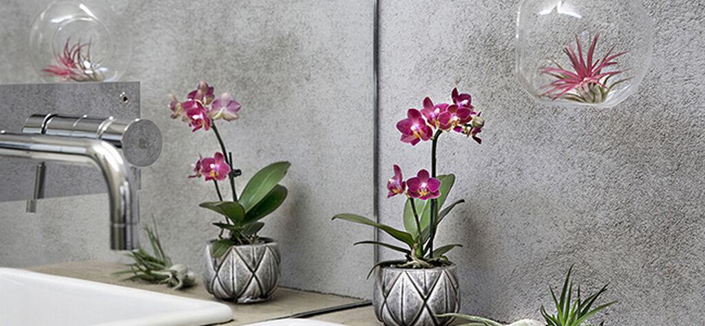 Innred med trendy luftplanter