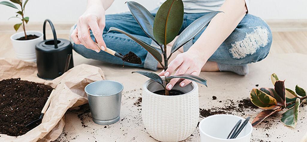 Slik lykkes du med en ny plante