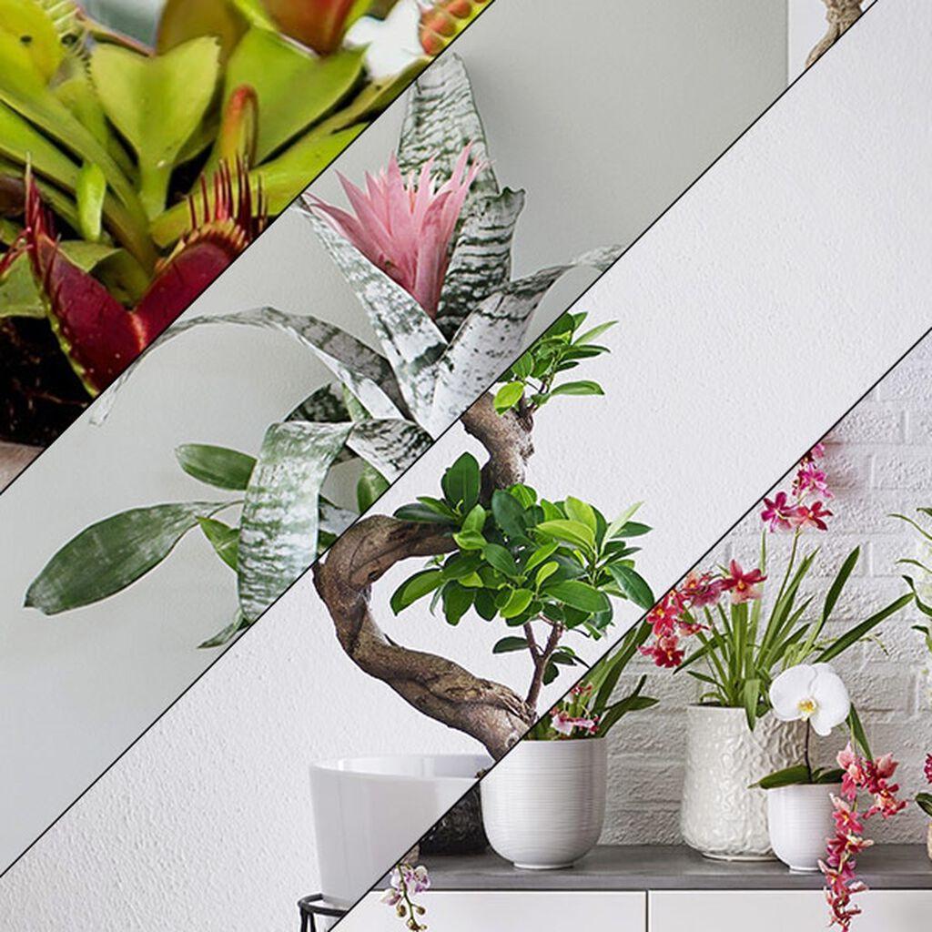Ti tips til planter som gave