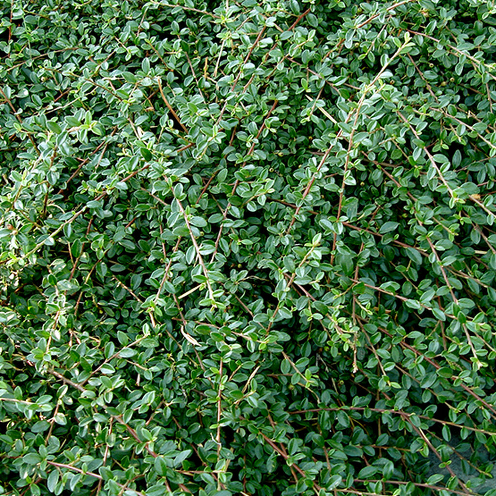 Markdekkende planter – slik lykkes du