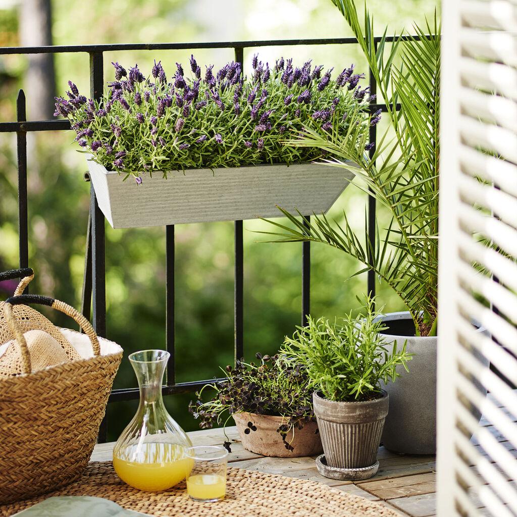 Ferdig blomsterinnsats til balkongkasse