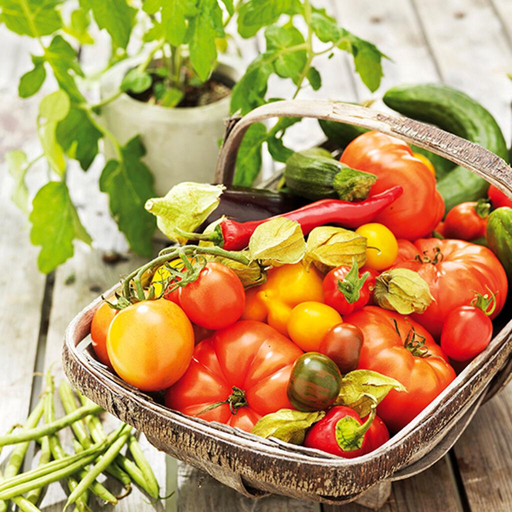 Dyrking av grønnsaker – slik lykkes du