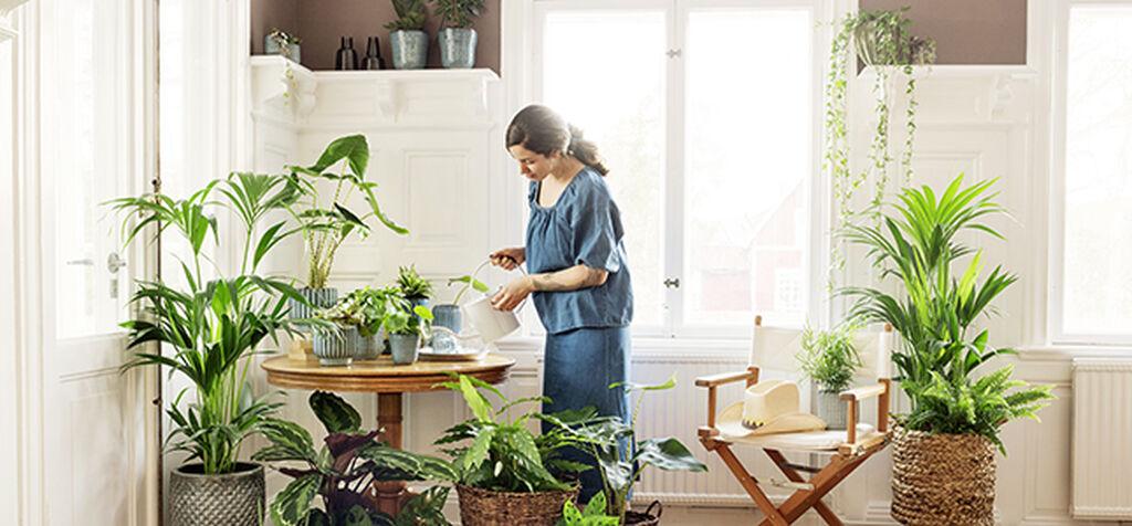 Finn riktig næring til inneplantene dine