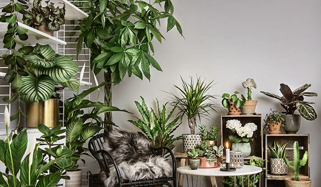Lettstelte planter