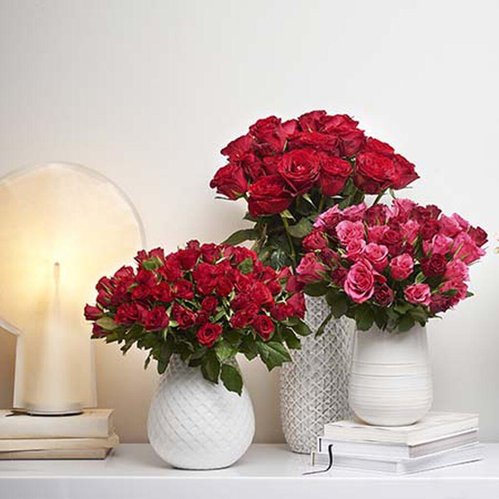 Plantasjens roser – fra produksjon til butikk