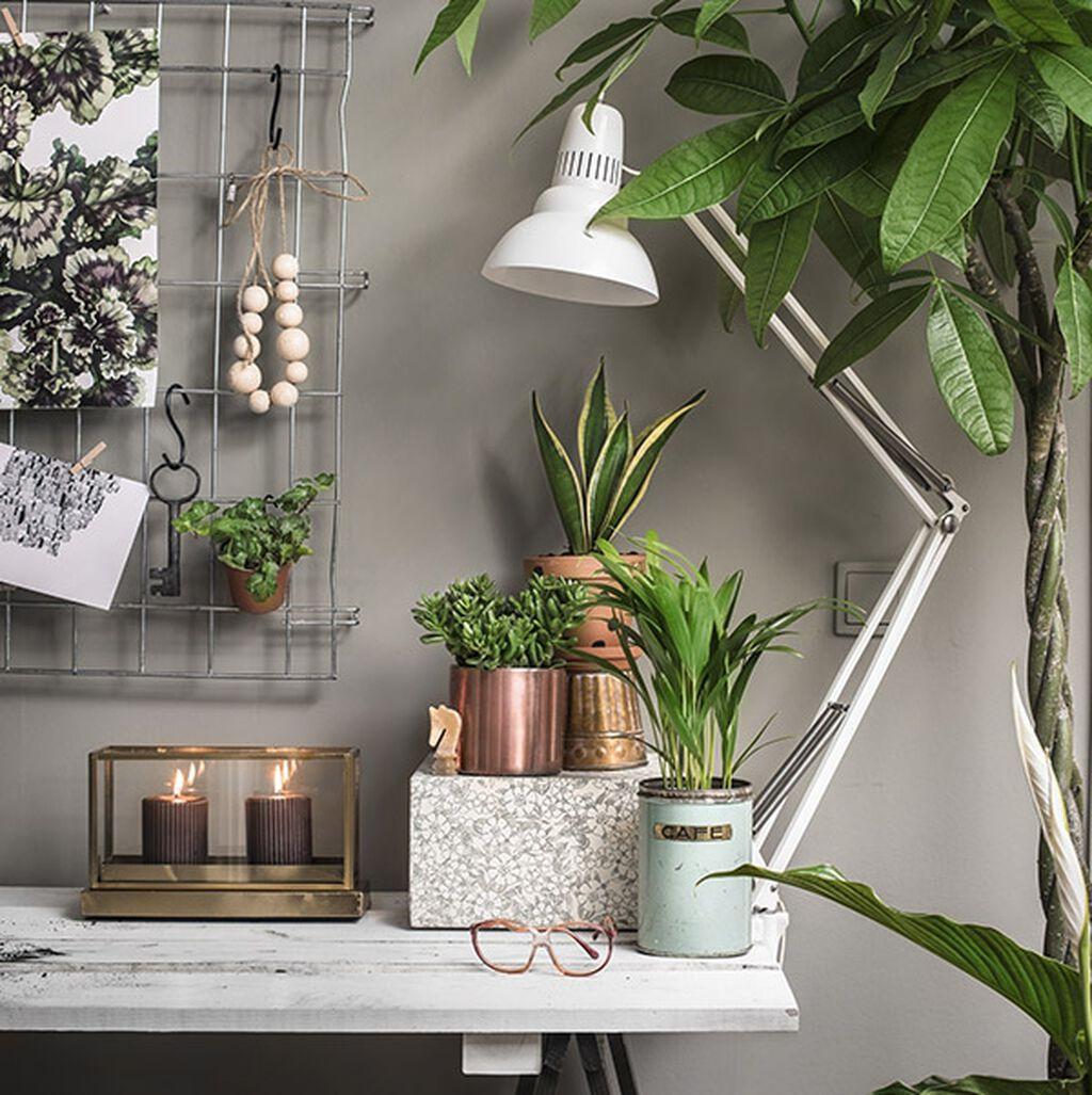 Sju trendy planter som gjør arbeidsmiljøet mer produktivt
