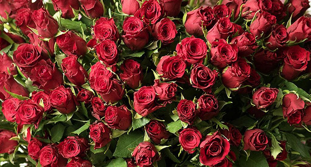 Fairtrade-sertifiserte rosor