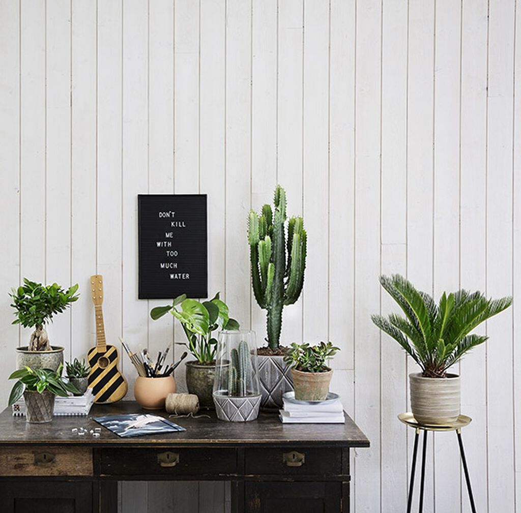 Tørkemotstandige planter, for deg som ikke vil vanne så ofte