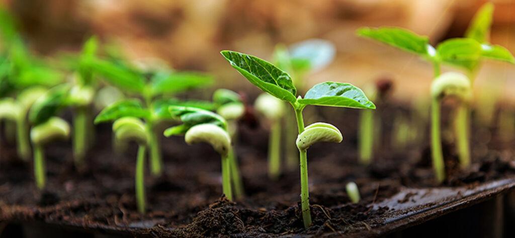 Vårplanting – slik lykkes du
