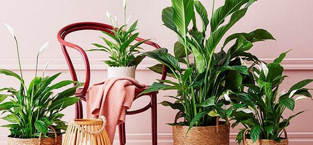 Sesongtilpassede planter – Limited Edition 2020