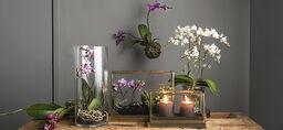 Orkidéer – nye måter å bruke dem på
