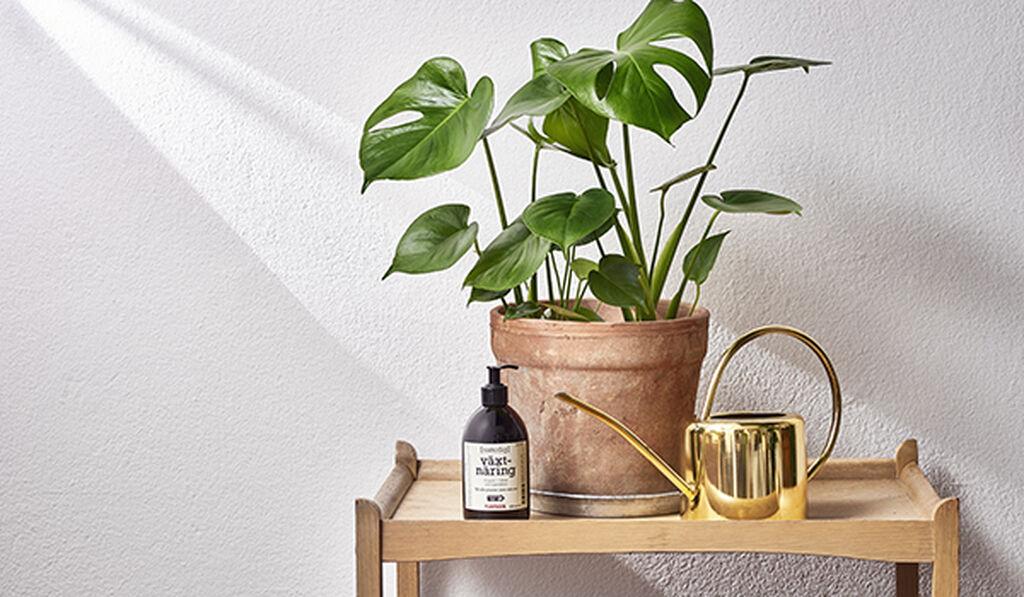 Moderne Vanning av dine inneplanter - slik lykkes du | Plantasjen FY-09