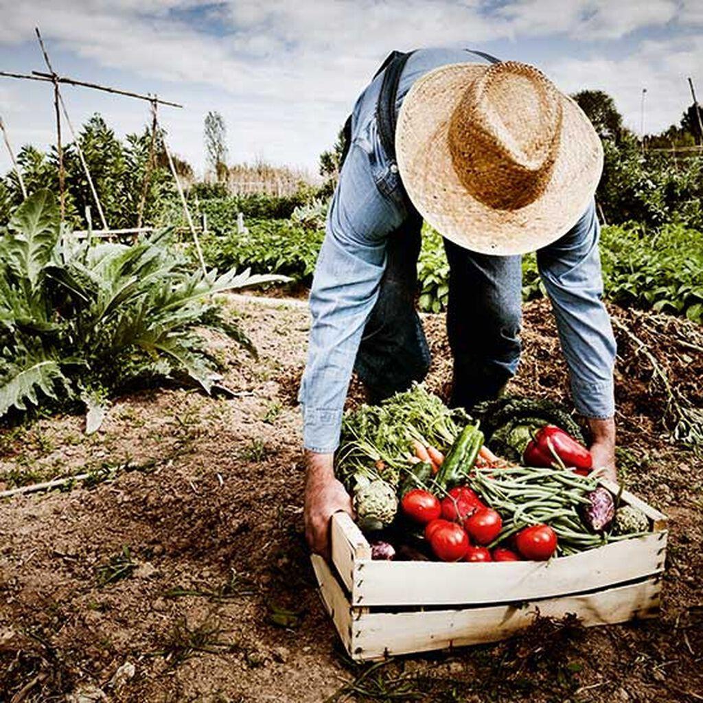 Gjør plass til grønnsakene