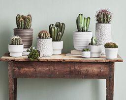 Kaktus – lettstelt og trendy