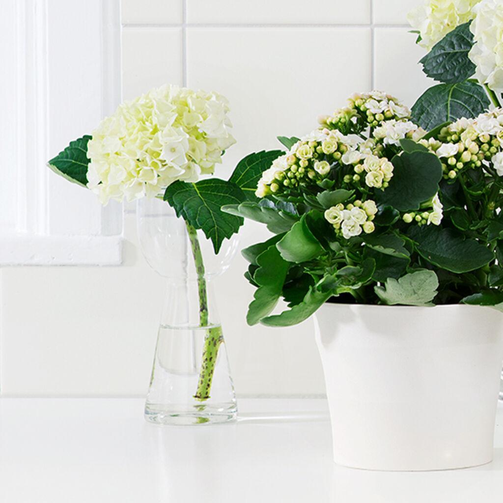 Planter skaper liv på baderommet