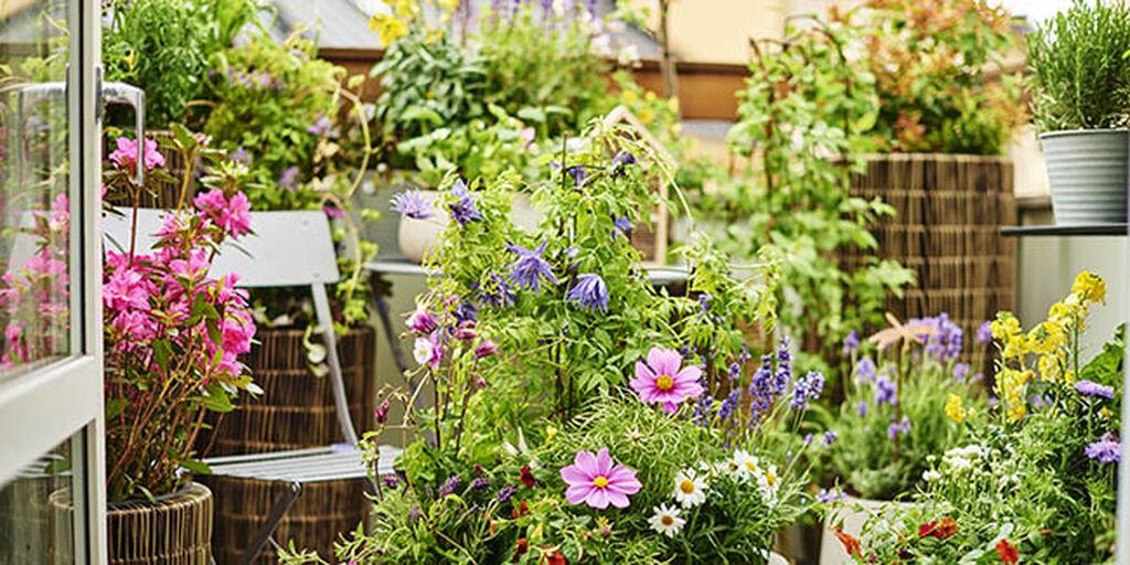 Planter på balkong og terrasse