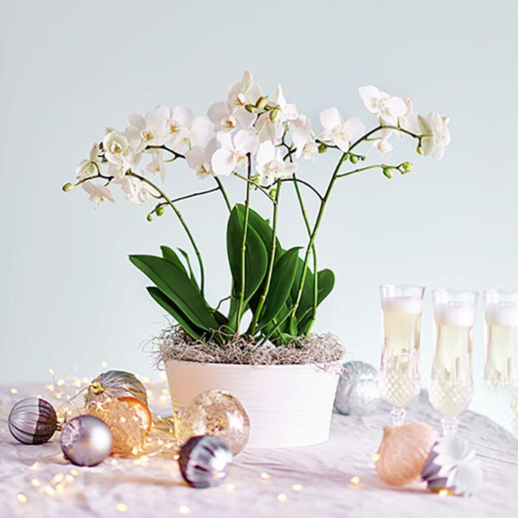 En luksuriøs orkidé eller friske snittblomster til nyttårsfest