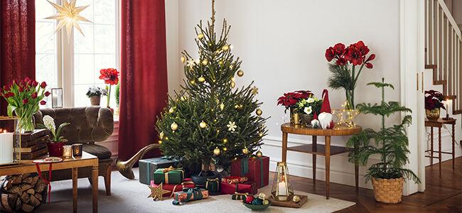 Desember – julestemning både inne og ute | Plantasjen