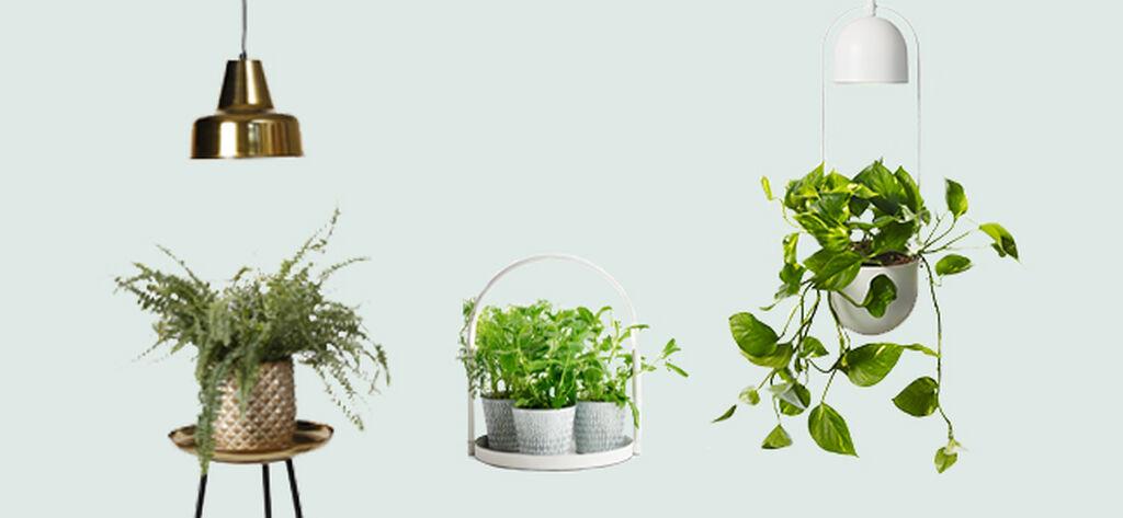 Plantelys gir frodighet året rundt