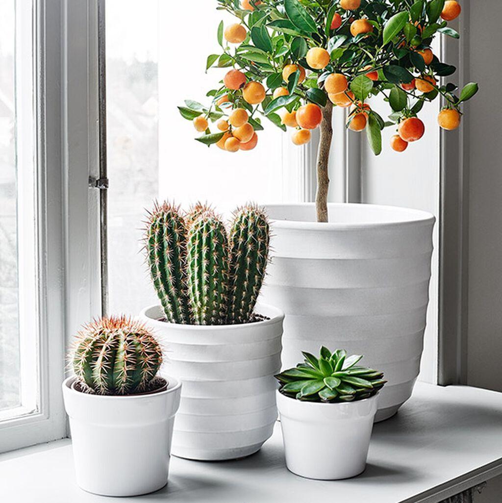 Herlige planter for alle vinduer