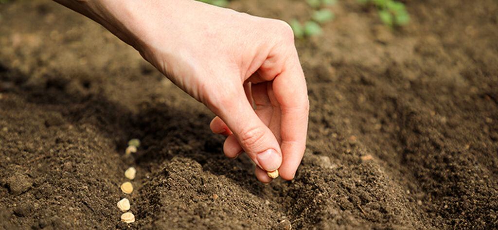 Høstplanting – slik lykkes du