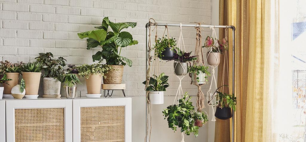 Å innrede grønt hjemme, med planter både høyt og lavt!