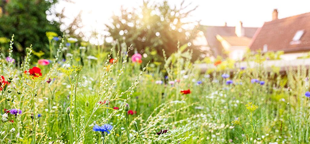 Blomsterengen – et paradis for pollinatorene