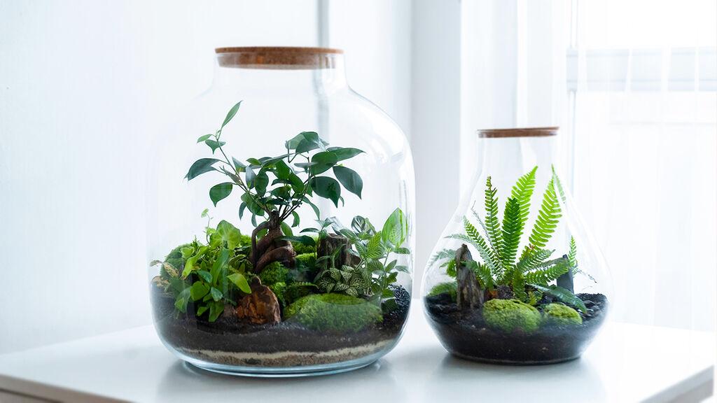 Dyrking i terrarium eller planteanlegg